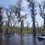 Get fit and see some amazing Sights on a Swamp tour in New Orleans