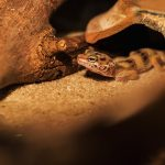 How to create best leopard gecko habitat