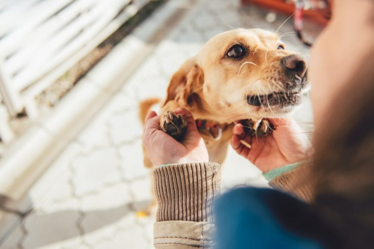 How does having a pet make our life better?